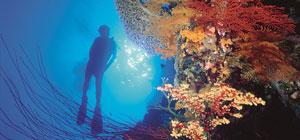 certified-diving-port-douglas