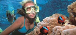 snorkelling-port-douglas