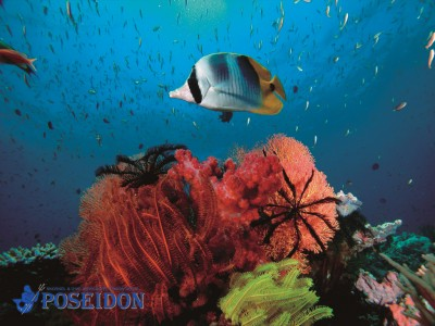 coral and marine life