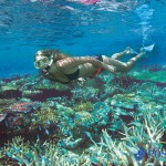 snorkelling with coral