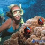 snorkelling with clowfish