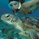 snorkelling with turtle